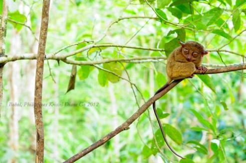 Kriscel Go 2012 Bohol-17