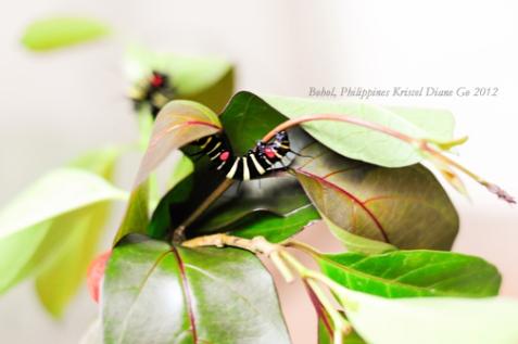 Kriscel Go 2012 Bohol-25