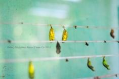 Kriscel Go 2012 Bohol-26
