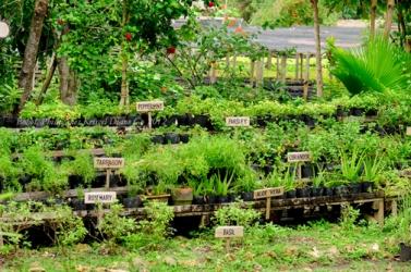 Kriscel Go 2012 Bohol-63