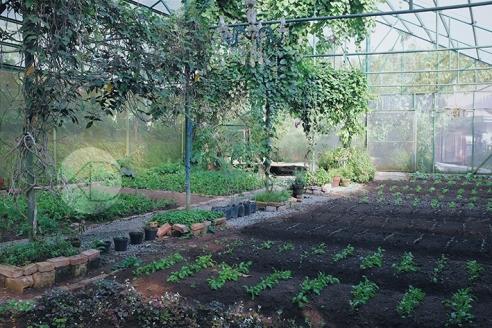 Sonya's Garden28