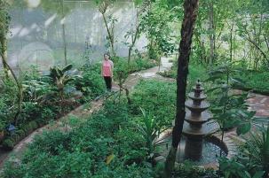 Sonya's Garden10