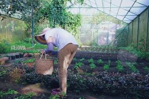 Sonya's Garden12
