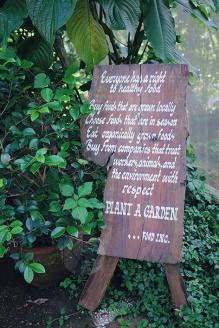 Sonya's Garden14