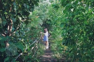 Sonya's Garden17