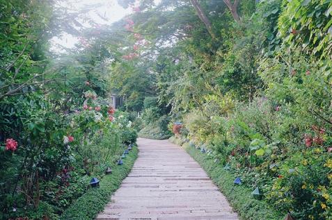 Sonya's Garden23